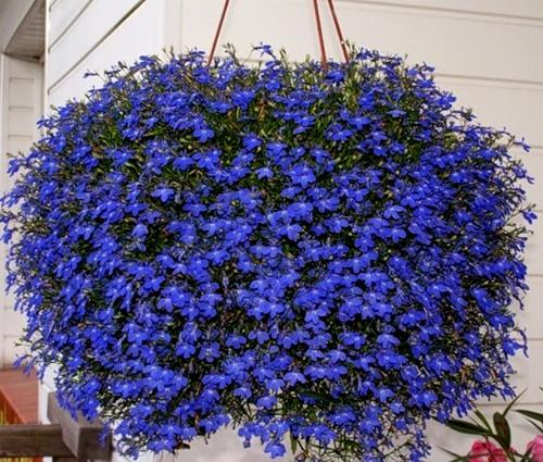 названия цветов с фото для огорода