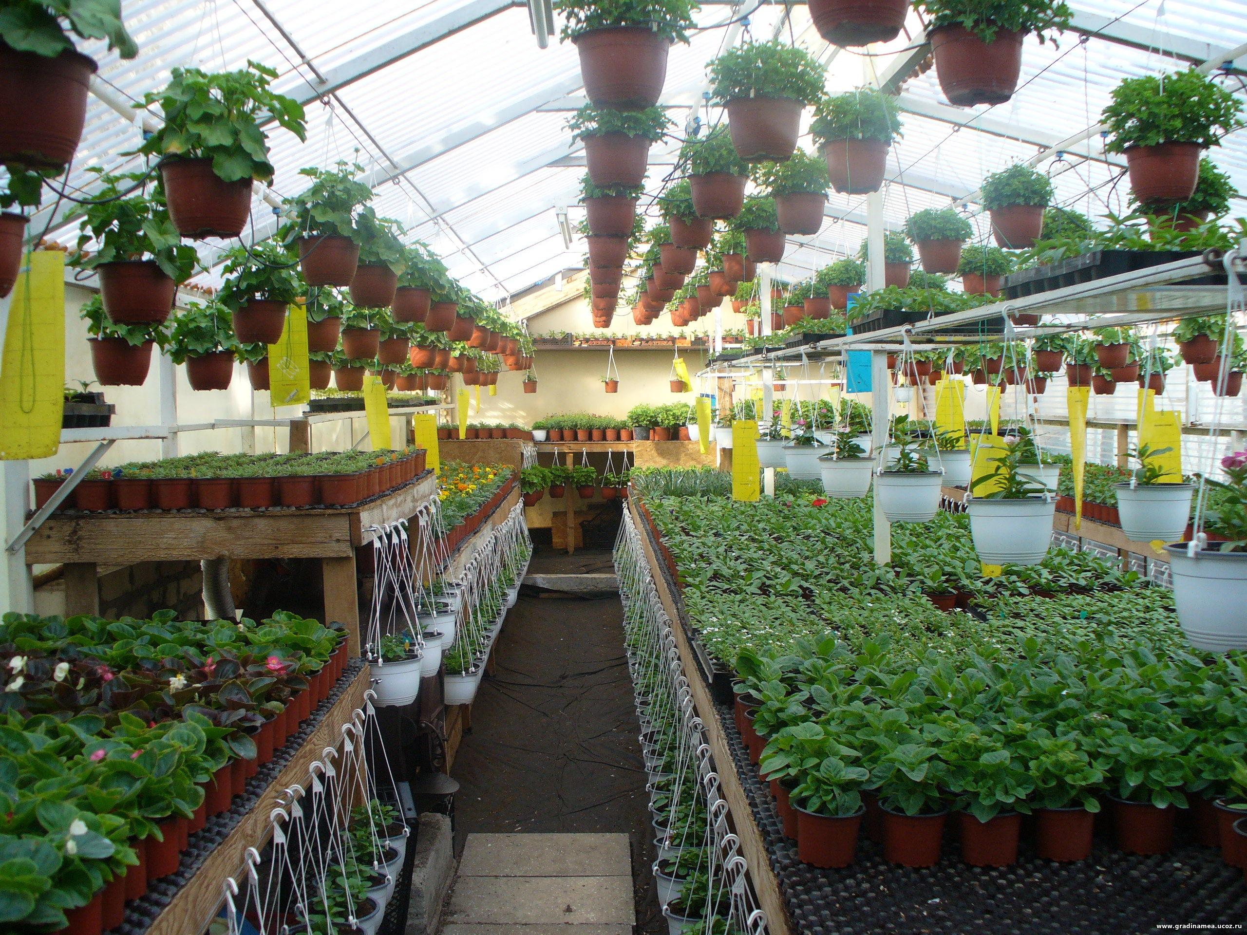 Купить рассаду в Санкт-Петербурге для сада и огорода 80